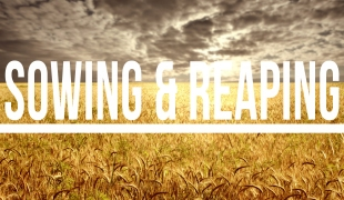 Sowing and Reaping - Marcus Curtis Reaping_blog